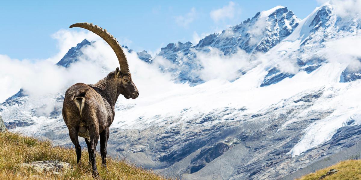 Visita i parchi nazionali e le riserve naturalistiche d'Italia