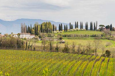 Conegliano Veneto