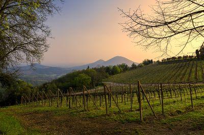 Euganean Hills