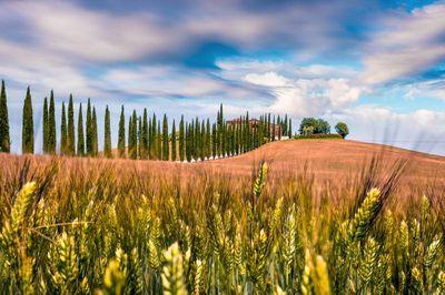 Siena hills